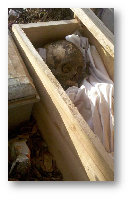 Skull in a coffin - plagues